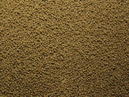 Sun-Dried Water Fleas
